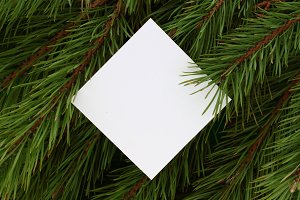 White blank on coniferous background