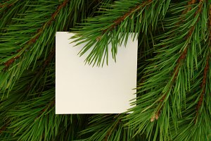 Blank on of fir branches. Mock up.