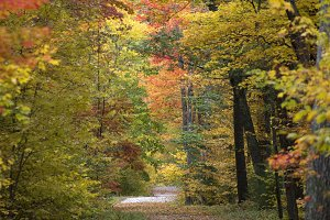 Fall foliage hiking path