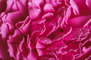 Flowers texture background
