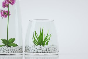 Flowers in a Glass.
