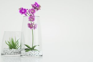 Flowers in the Glass.