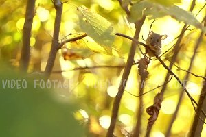 Mouse on a Branch in the Autumn Forest