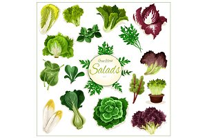 Salad greens, leafy vegetables vector poster