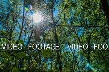 timelapse the sun shines through the leaves of the trees in the forest green succulent plant fresh green blue sky beautiful picture contrast, the sun through the crowns of the trees