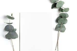 Styled stock photo with eucalyptus