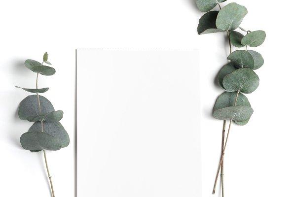 Styled stock photo with eucalyptus