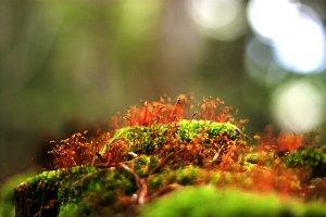 Flowering moss took a fancy stones