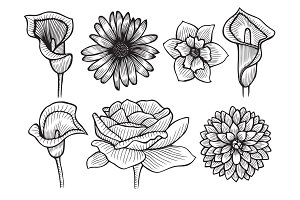 Hand drawn sketch flowers