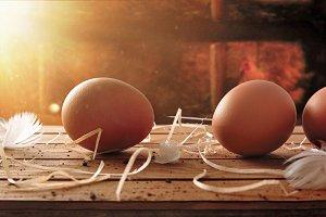 Freshly picked eggs in henhouse