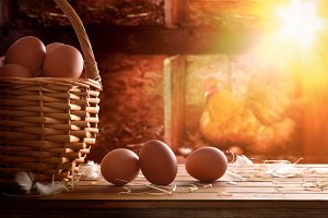 Eggs in basket within henhouse