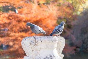 Two birds on vase sculpture.