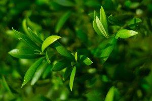 Green Plant.