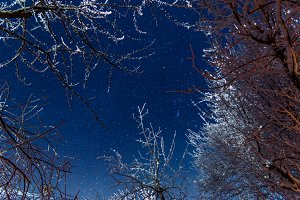 Blue star sky through frozen trees