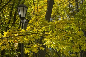 Lantern among the autumn leaves.