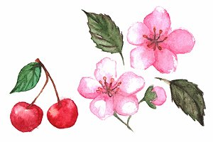 Watercolor cherry berries flowers