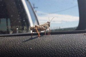 Grasshopper in Macro