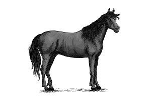 Black wild horse standing vector sketch