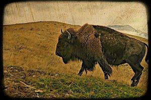 Female Buffalo ART