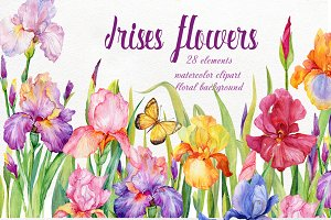 iris flowers. watercolor clipart