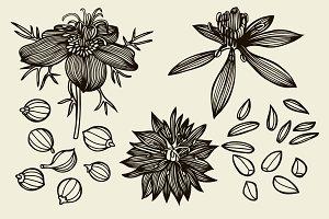 Sketch set of Nigella sativa flowers and leaves