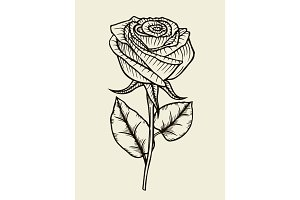 Rose. Vector. Hand drawn artwork
