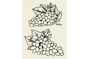 Set of various grape.