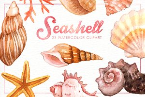 Seashell Watercolor cliparts