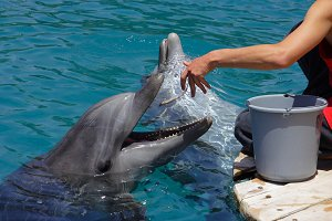 Feeding of dolphins in aquarium