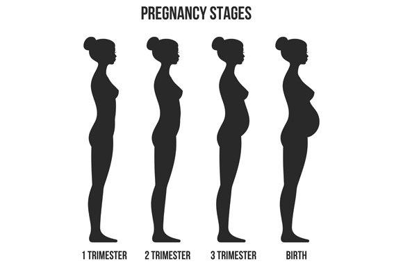 Pregnancy Stages ~ Illustrations ~ Creative Market