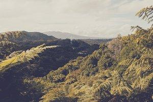Flora of New Zealand #02