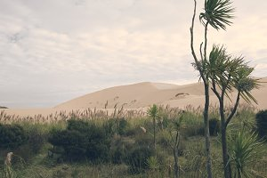 Vintage Dune Landscape and Flowers