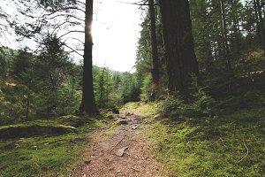 Lush Forest Path