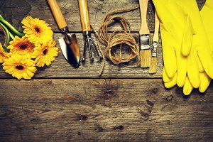 Gardening concept with tools, flower