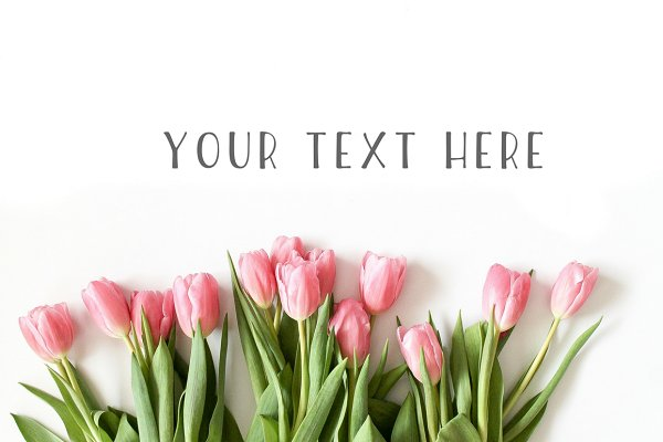 Pink Tulip Floral Stock Photo