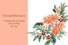 Chrysanthemums - Watercolor clip art