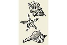 Set of vector vintage seashells