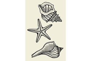 Set of vector vintage seashells