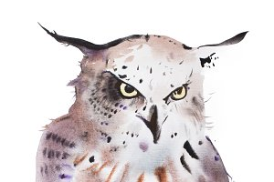 Hand drawn watercolor illustration portrait of owl