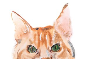 watercolor painting, red-headed curious watching furry cat aquarelle drawing