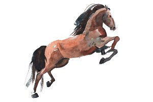 watercolor painting of rearing up horse, brown mustang getting on legs aquarelle drawing