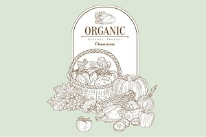 Organic, Vector Illustration Banner