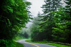 Pine layered foggy highway