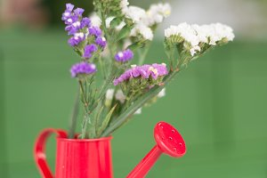 Plants in a red watering can