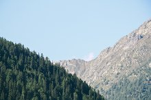pine forest on a mountain side