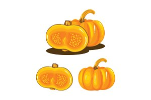 Pumpkin Fruit Realistic Vector
