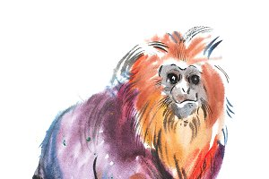 Golden Lion head tamarin Watercolor painting of a cute sitting monkey 2016 symbol.