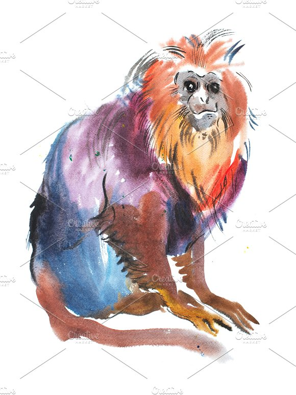 Golden Lion Head Tamarin Watercolor Painting Of A Cute Sitting Monkey 2016 Symbol