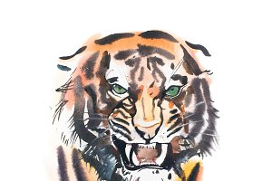 Watercolor drawing of angry looking tiger. Animal portrait on white background.