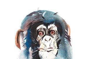 Watercolor portrait of grey furry monkey. Aquarelle drawing 2016 symbol